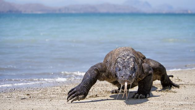 Visit Komodo with Intrepid Travel