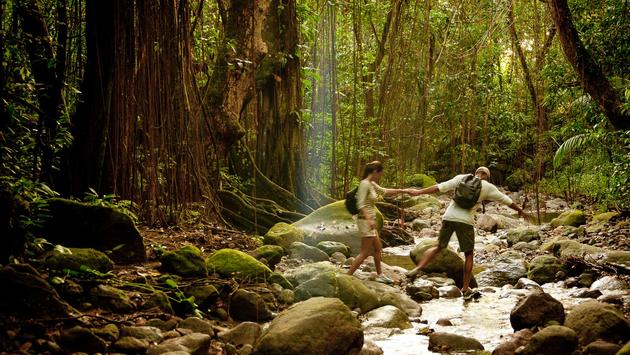 St. Kitts rainforest hike from St. Kitts and Nevis Tourism Authority