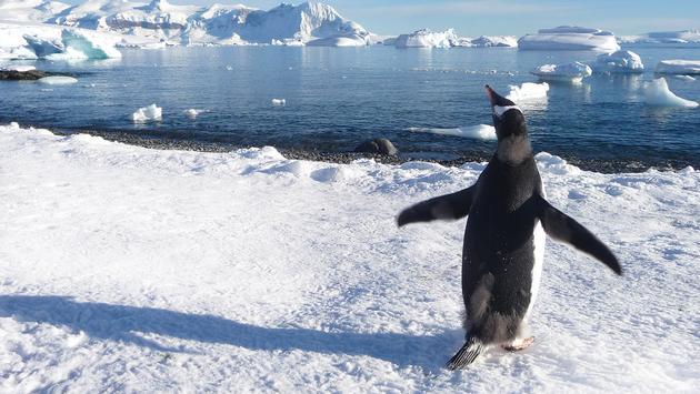 Antarctica Penguin Aurora Expeditions