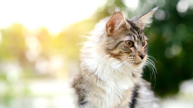 Stray black and white cat