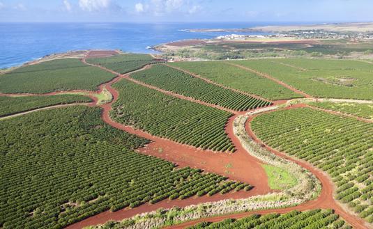 Coffee Plantations By The Coast, Kauai