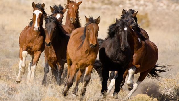 Mustang Monument Wild Eco Horse Resort, mustangs, wildlife