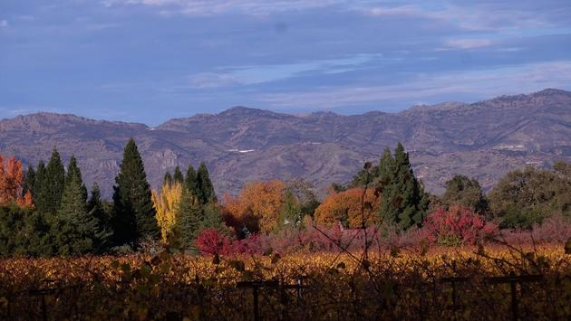 The beautiful fall colours of Sonoma and Napa valleys.