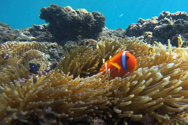 Dive Deeper With These New Offerings on the Great Barrier Reef