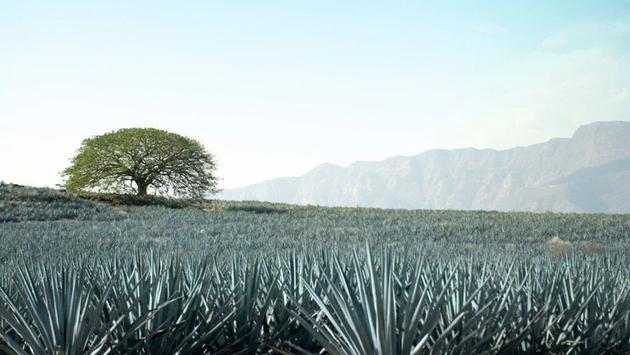 Tequila fields (Courtesy of Guadalajara Tourism)