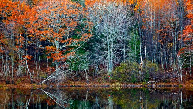 Autumn reflections of trees and water in New Brunswick, Canada. (jamieroach / iStock / Getty Images Plus)