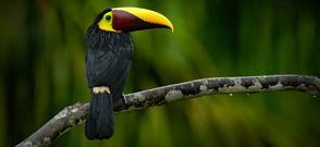 Tropical Costa Rica