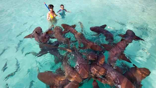 Mother and son swimming with nurse sharks (photo via shalamov / iStock / Getty Images Plus)