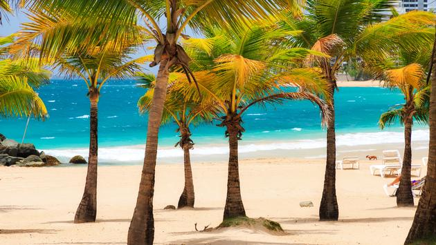 Beautiful tropical palm trees at popular touristic Condado beach in San Juan, Puerto Rico (Photo via dennisvdw / iStock / Getty Images Plus)