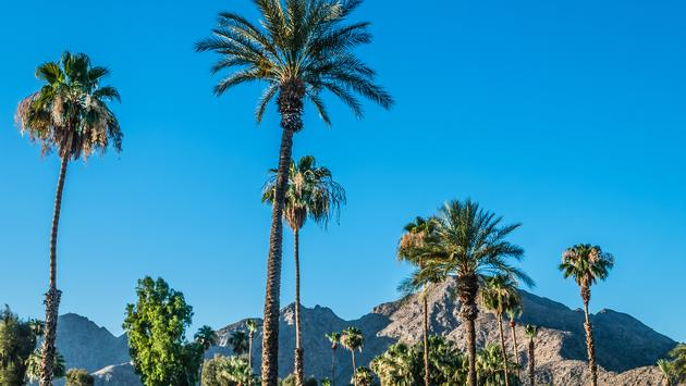 A Palm Springs landscape with Palm trees and the San Jacinto Mountain range. (andykazie / iStock / Getty Images Plus)