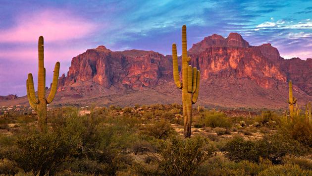 Saguaros at Sunset in Sonoran Desert near Phoenix. (Photo via tonda / iStock / Getty Images Plus)