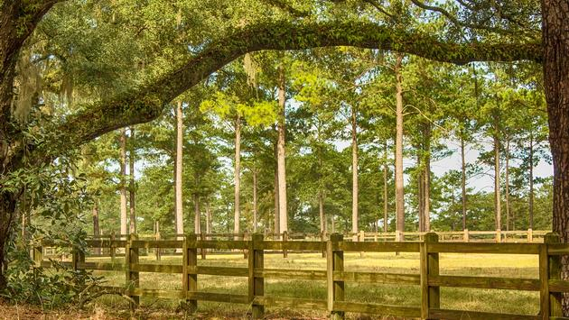 Wooden fence, meadows and tall oak and pine trees in Tallahassee, Florida (photo via fallbrook / iStock / Getty Images Plus)