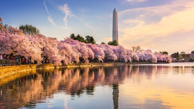 Washington DC, USA at the tidal basin with Washington Monument in spring season. (photo via SeanPavonePhoto / iStock / Getty Images Plus)