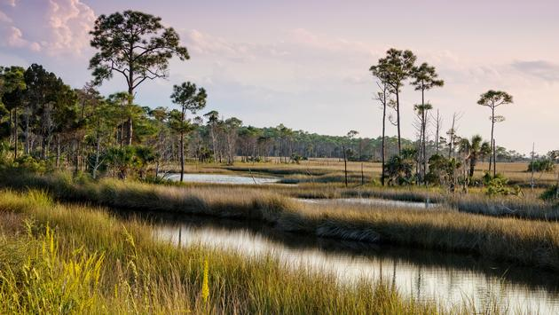 Swampy landscape in St. Marks National Wildlife Refuge in St. Marks, Florida (photo via fallbrook / iStock / Getty Images Plus)