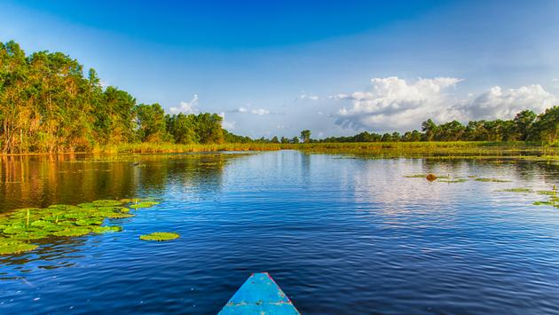 Travelling by boat through Matapica Swamps in Suriname,South America (photo via atosan / iStock / Getty Images Plus)