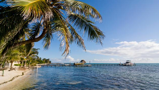 Palm tree and dock in clear blue tropical water in Caye Caulker, Belize (Photo via michalzak / iStock / Getty Images Plus)