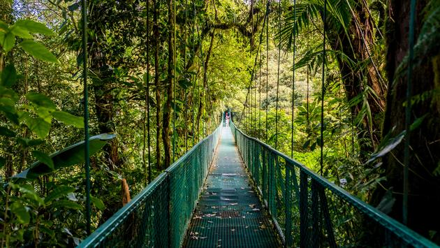 Walking on hanging bridges in Cloudforest - Travel destination Costa Rica (SimonDannhauer / iStock / Getty Images Plus)