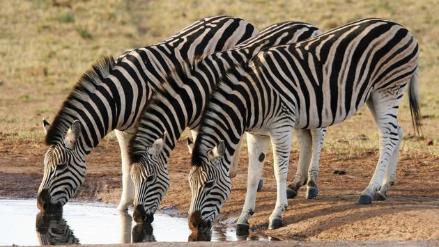 Exploring South Africa, Victoria Falls & Botswana
